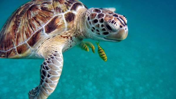 Maldive - tartarughe