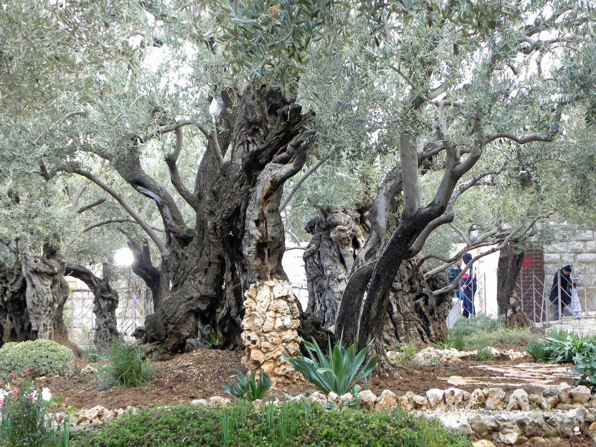 Pellegrinaggi Terra Santa jerusalem